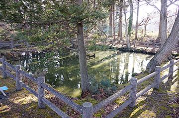 ↑西側から見た「清水池」全景。