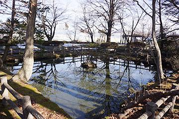↑南側から見た「清水池」全景。