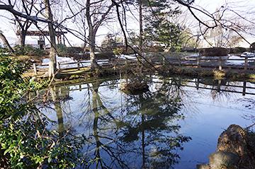 ↑東側から見た「清水池」全景。