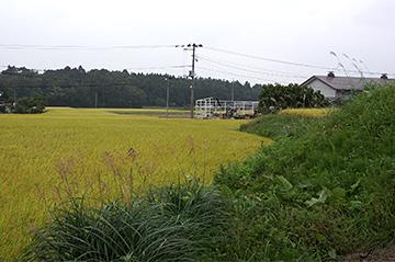 sinasakaniida212
